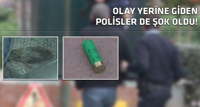 İstanbulun göbeğinde şaşkına çeviren olay!