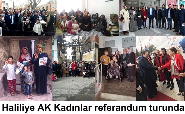 Haliliye AK Kadınlar Referandum
