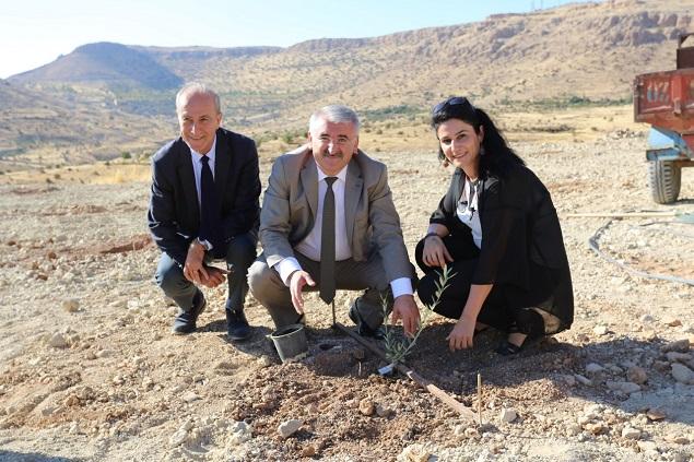 Harran Üniversitesi Zeytin Çeşitliliğini Gelecek Nesillere